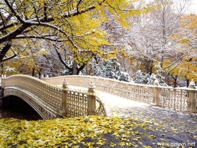 www.bridge