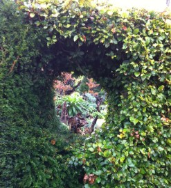 hedge-hole