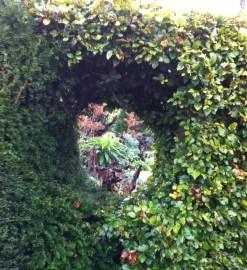 hedge-hole